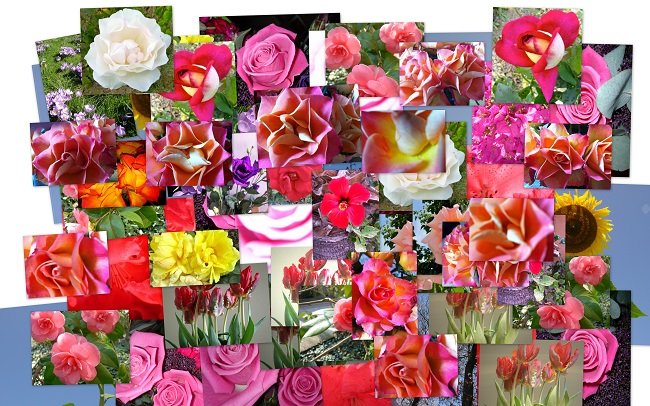 BloemencollageC